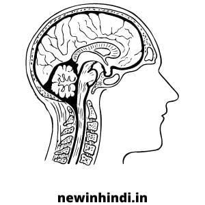 divya medha vati patanjali benefits in hindi